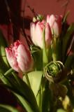 January Tulips