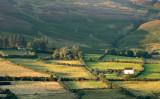 Mountain Farms