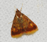 Pyralid and Crambid Snout Moths (Super Family: Pyraloidea)