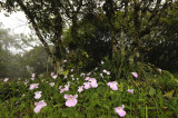 Open  forest, wild flowers and orchids all over the place