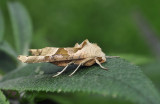 Agaatvlinder