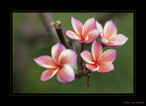 Flowers & Plants 2012