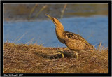 british_birds