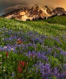Mt. Rainier  Wildflower Sunrise 2