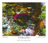fish_2561Passage.jpg