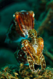 Inquisitive cuttlefish