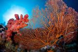 Menjangan reefscape