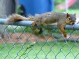 Lazy squirrel