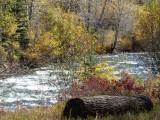 River near Bailey, CO
