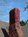 Red brick, sumac and shadow