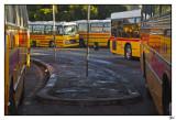 001-Mal-Bus.jpg