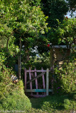 Pink Gate II