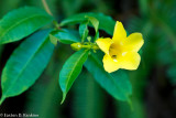 Rest Stop - Allamanda with Guest