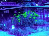 Kuri35_BV6_P1450145_c.jpg