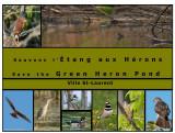 L'étang aux Hérons (Green heron pond)