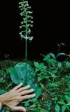 2011 Orchid Trip Part 1: Grand Marais MI and Bemidji MN