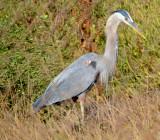 Bolsa Chica Wetlands Preserve