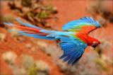 coloredParrot.jpg