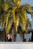 Palm Comms