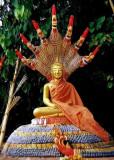 Image of the Buddha with naga