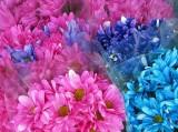 abingdon flowers.jpg
