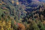 nippongi foliage.jpg