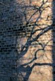 trees shadows bricks.jpg