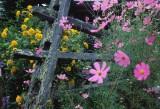 kaida flowers.jpg