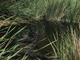 grassy pool.jpg