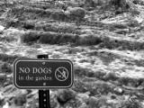 no dogs.jpg