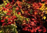 akazawa foliage.jpg