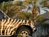 safari tours.jpg