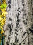 spring bark.jpg