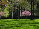 oval spring.jpg