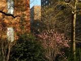 spring morning.jpg