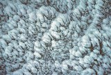 snow feathers.jpg