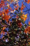 berries foliage.jpg