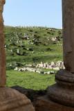 726 Voyage en Jordanie - IMG_1212_DxO Pbase.jpg