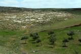 1113 Voyage en Jordanie - IMG_1622_DxO Pbase.jpg