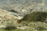 1158 Voyage en Jordanie - IMG_1668_DxO Pbase.jpg