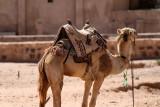 2050 Voyage en Jordanie - IMG_2550_DxO WEB.jpg