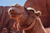 2116 Voyage en Jordanie - IMG_2616_DxO WEB.jpg