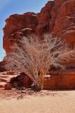 2128 Voyage en Jordanie - IMG_2626_DxO WEB.jpg