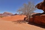 2129 Voyage en Jordanie - IMG_2627_DxO WEB.jpg