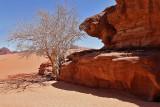 2130 Voyage en Jordanie - IMG_2628_DxO WEB.jpg