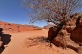 2131 Voyage en Jordanie - IMG_2629_DxO WEB.jpg