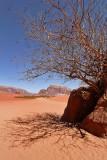 2135 Voyage en Jordanie - IMG_2632_DxO WEB.jpg