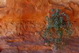 2145 Voyage en Jordanie - IMG_2642_DxO WEB.jpg