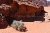 2239 Voyage en Jordanie - IMG_2737_DxO web2.jpg