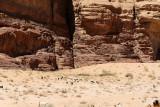 2359 Voyage en Jordanie - IMG_2862_DxO web2.jpg